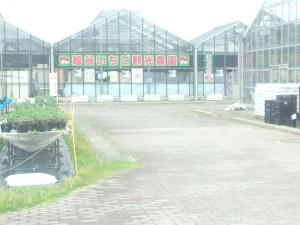 越谷いちご観光農園